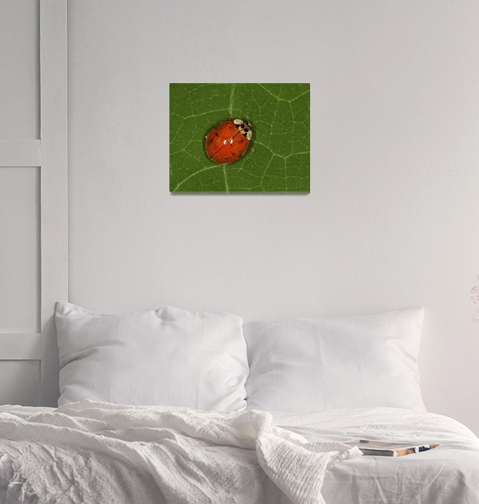"""""""Lady Bug  #147""""  by MatthewLermanPhotography"""