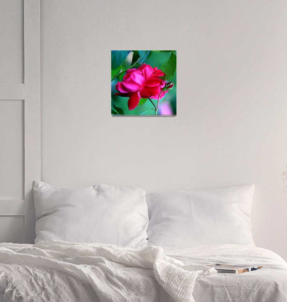"""""""Rose Squared""""  (2010) by rayjacque"""