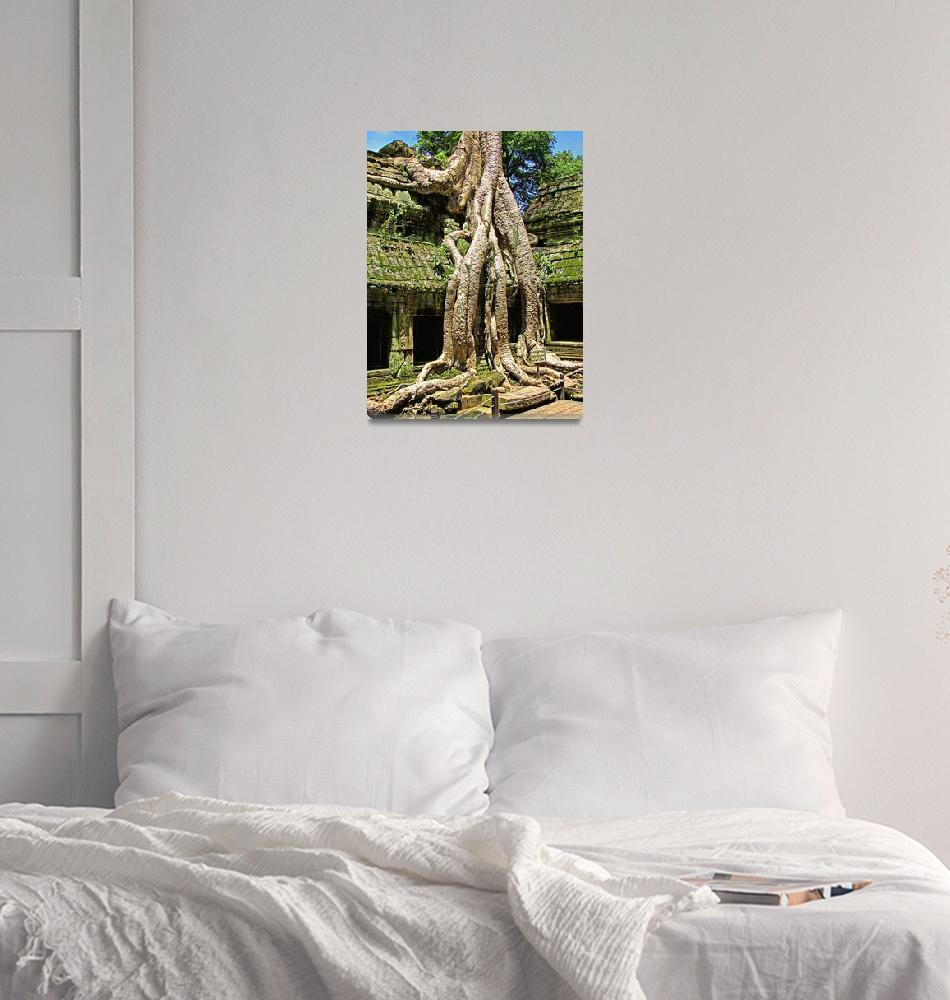 """Te Prohm Temple Snake Tree 1""  (2011) by Markomarko"