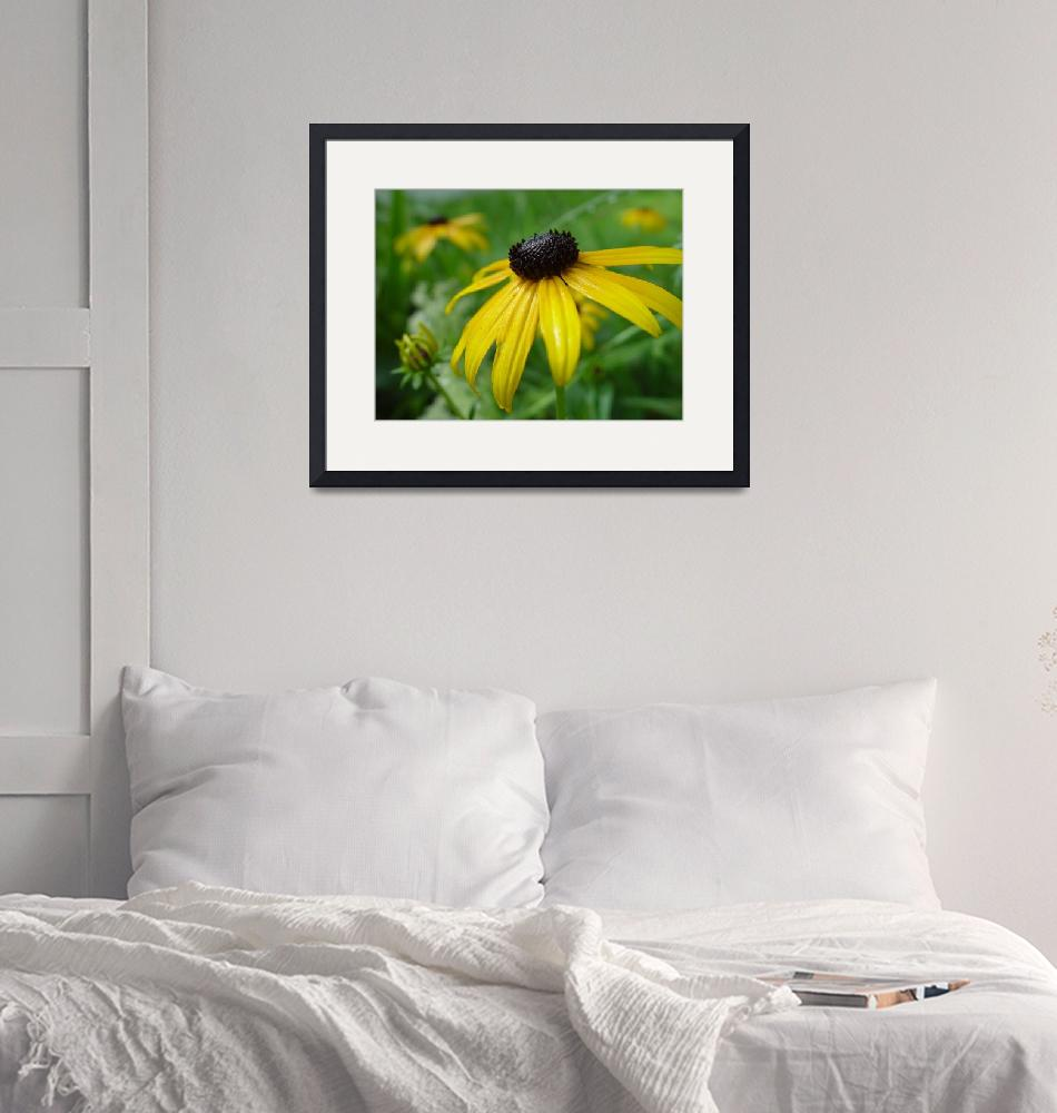"""Portrait of Black-eyed Susan""  (2010) by bleij50"