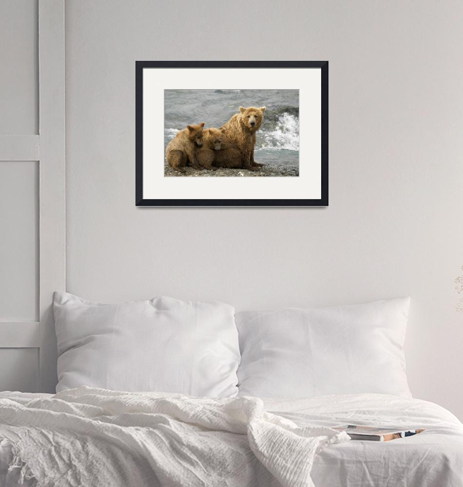 """""""Mother Grizzly With Cubs By River, Southwest Alask""""  by DesignPics"""