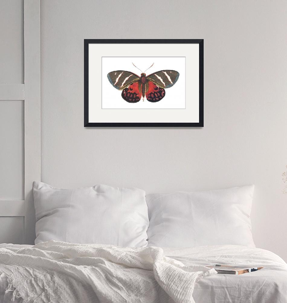 """Papilio Icarus Illustration""  by FineArtClassics"