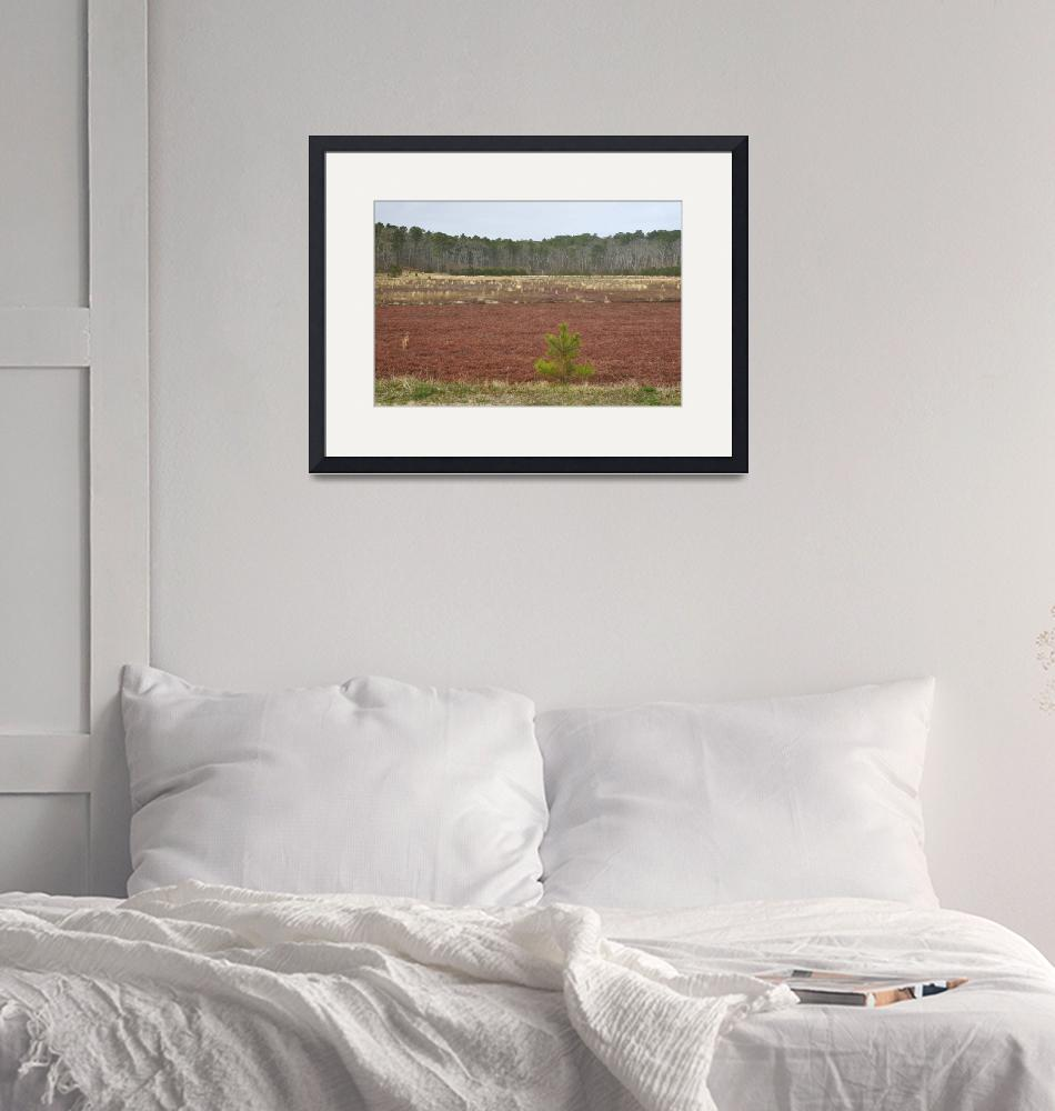"""Cape Cod Cranberry Bog""  (2019) by LukeMoore"
