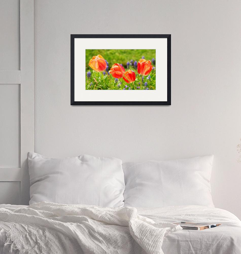 """Tulips""  (2009) by JeffStephenson"