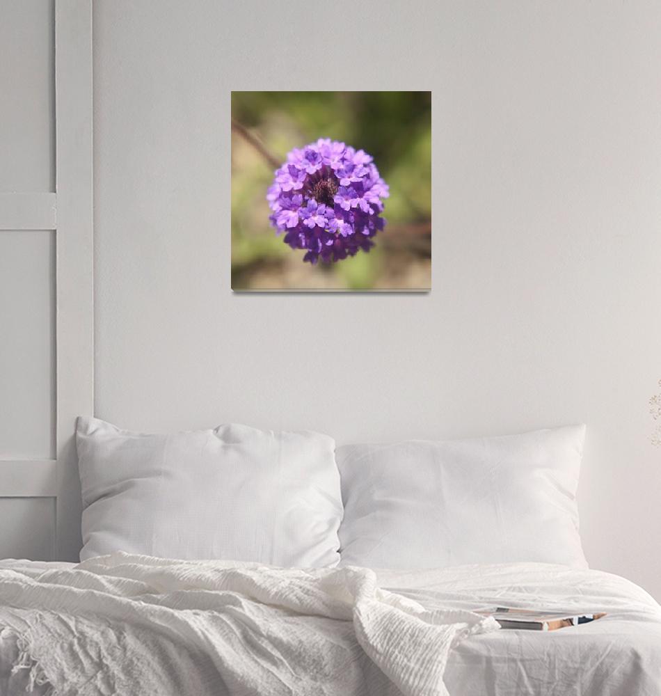 """""""Verbena rigida flower photography""""  (2014) by SammyPhoto"""