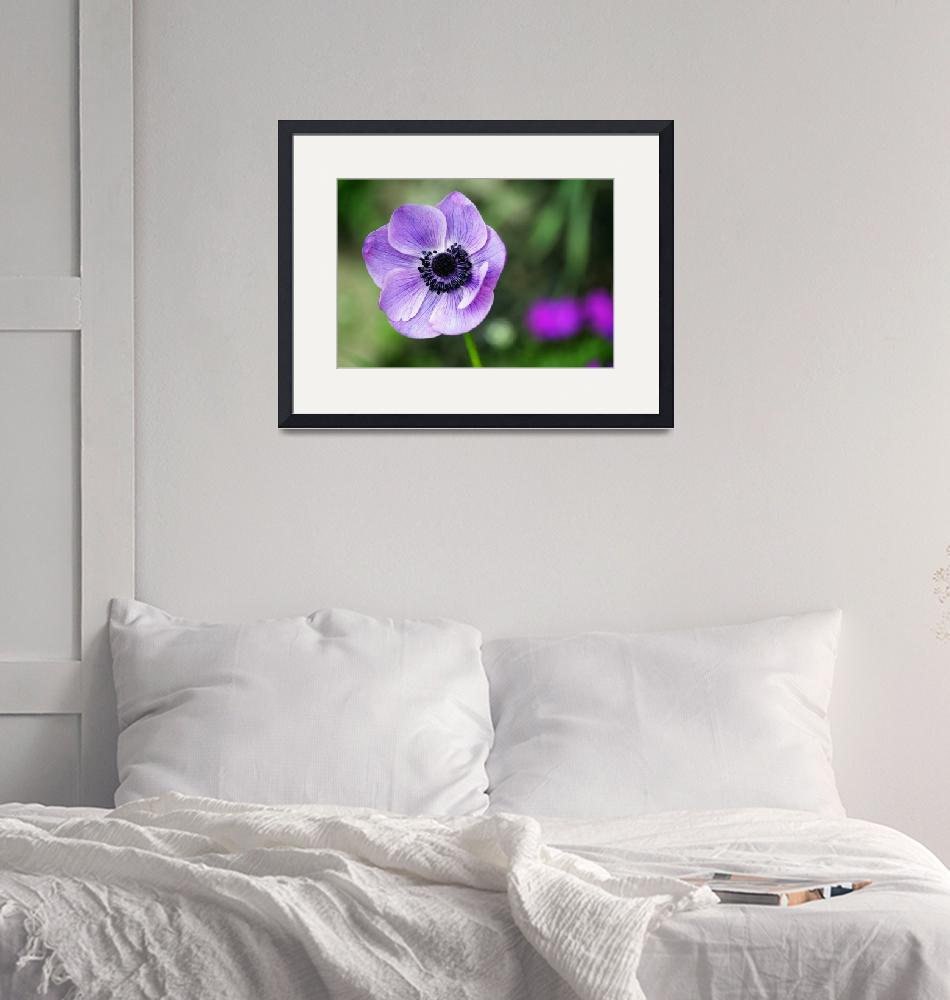 """""""Cool Pic Framed Photo""""  by buddakats1"""