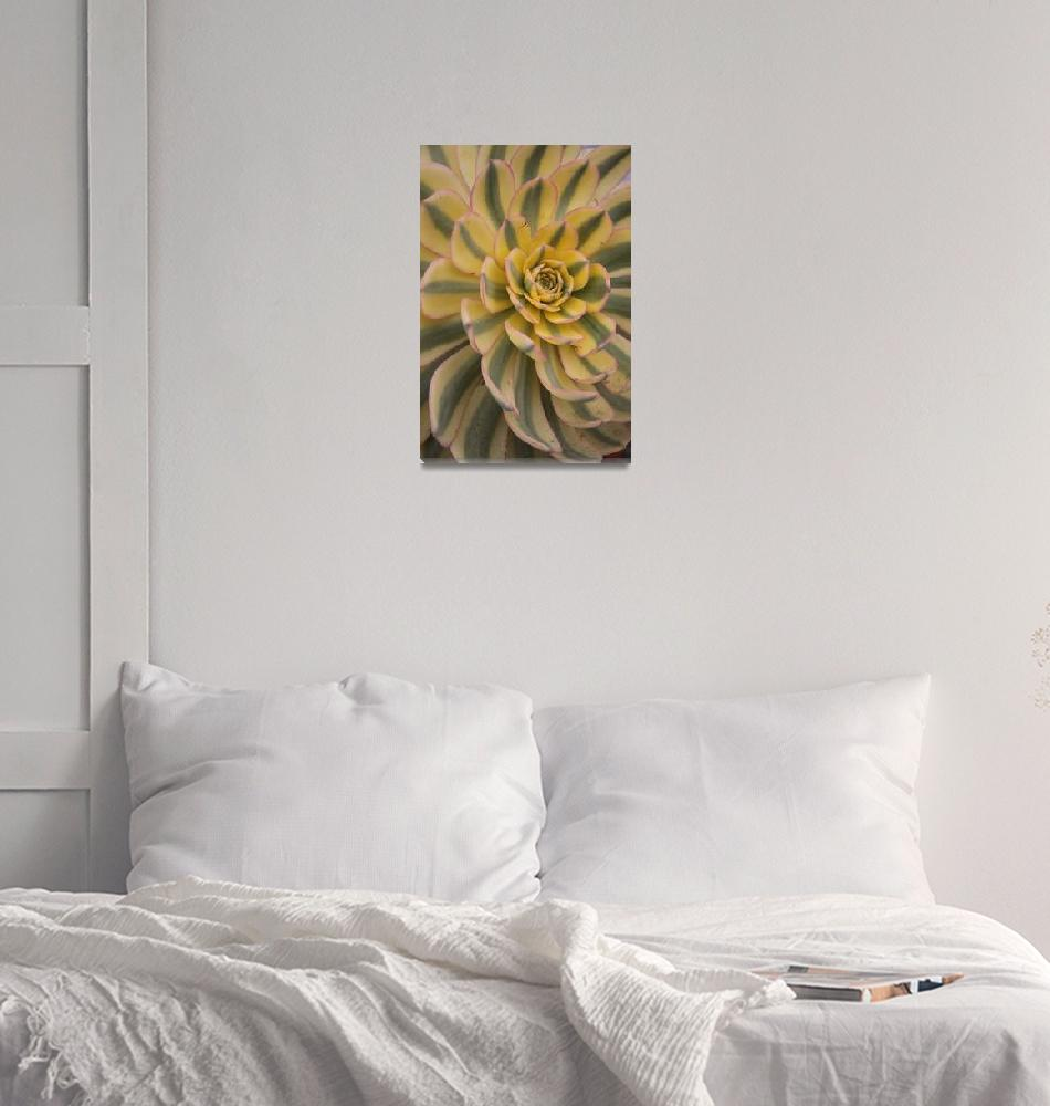 """Desert Bloom""  (2010) by stephcollier"