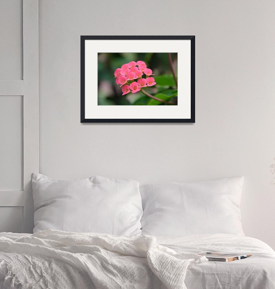 """""""Pink Multiple Blooming Flower""""  (2014) by jdlord"""