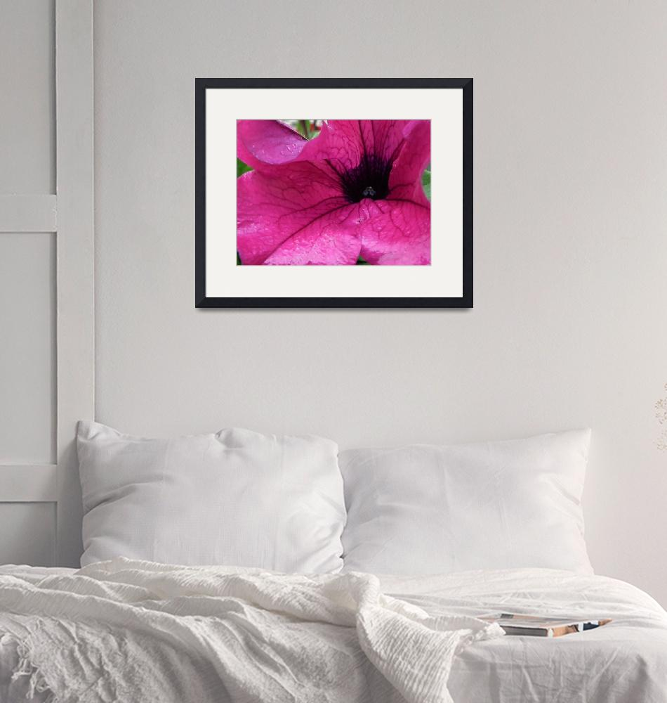 """""""Washed petunia""""  (2011) by susanboogie"""