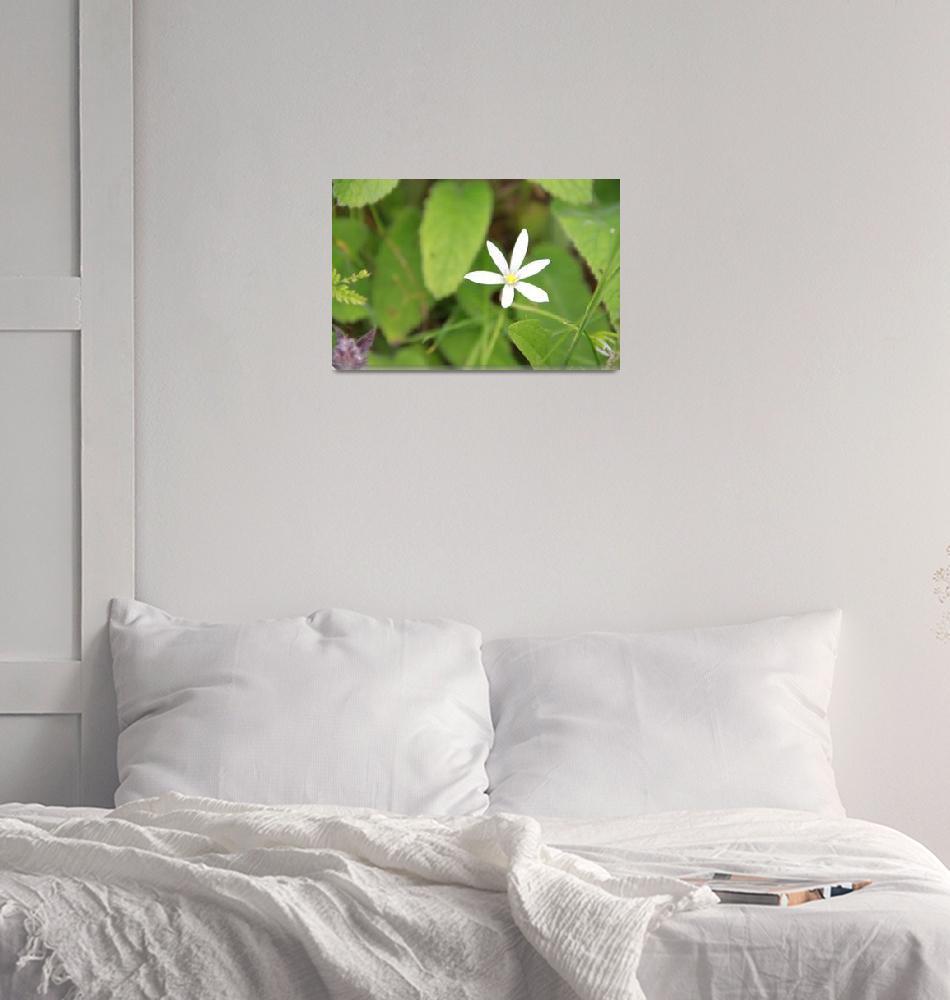 """Wild flower""  (2010) by easyfigure"