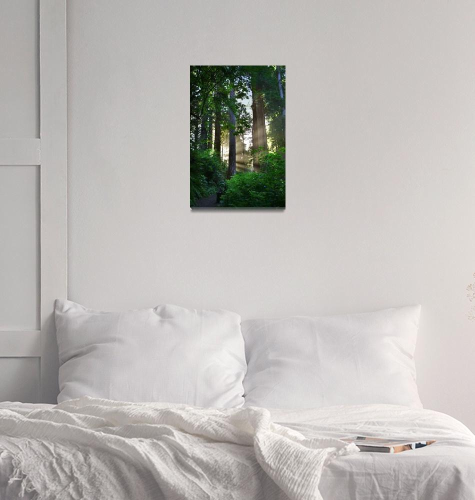 """""""Sunlight In The Redwoods (V)""""  by pbk"""