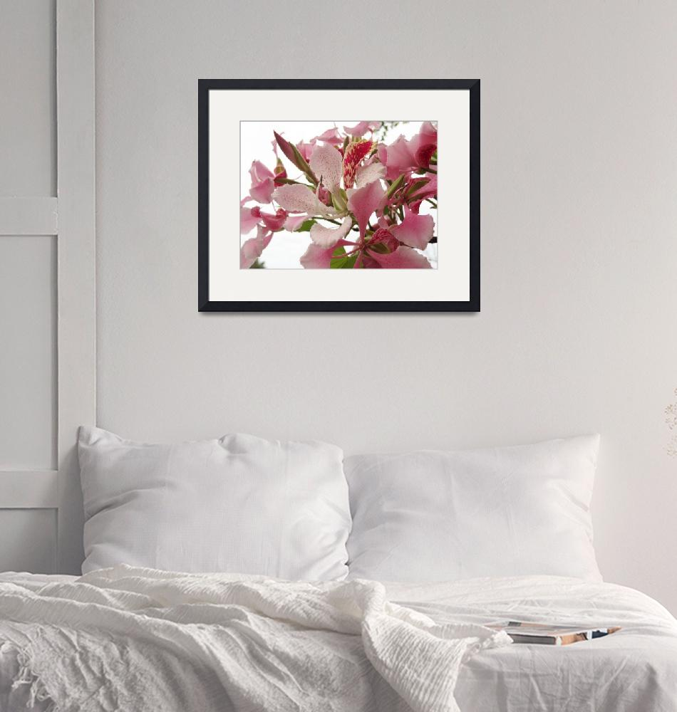 """""""Pink Flower""""  (2012) by M-photos"""