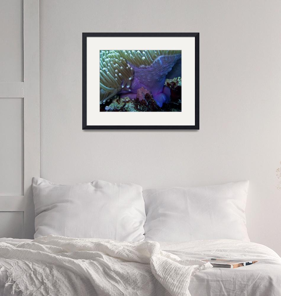 """Purple Anemone on Victor Coral Head""  (2008) by Mac"