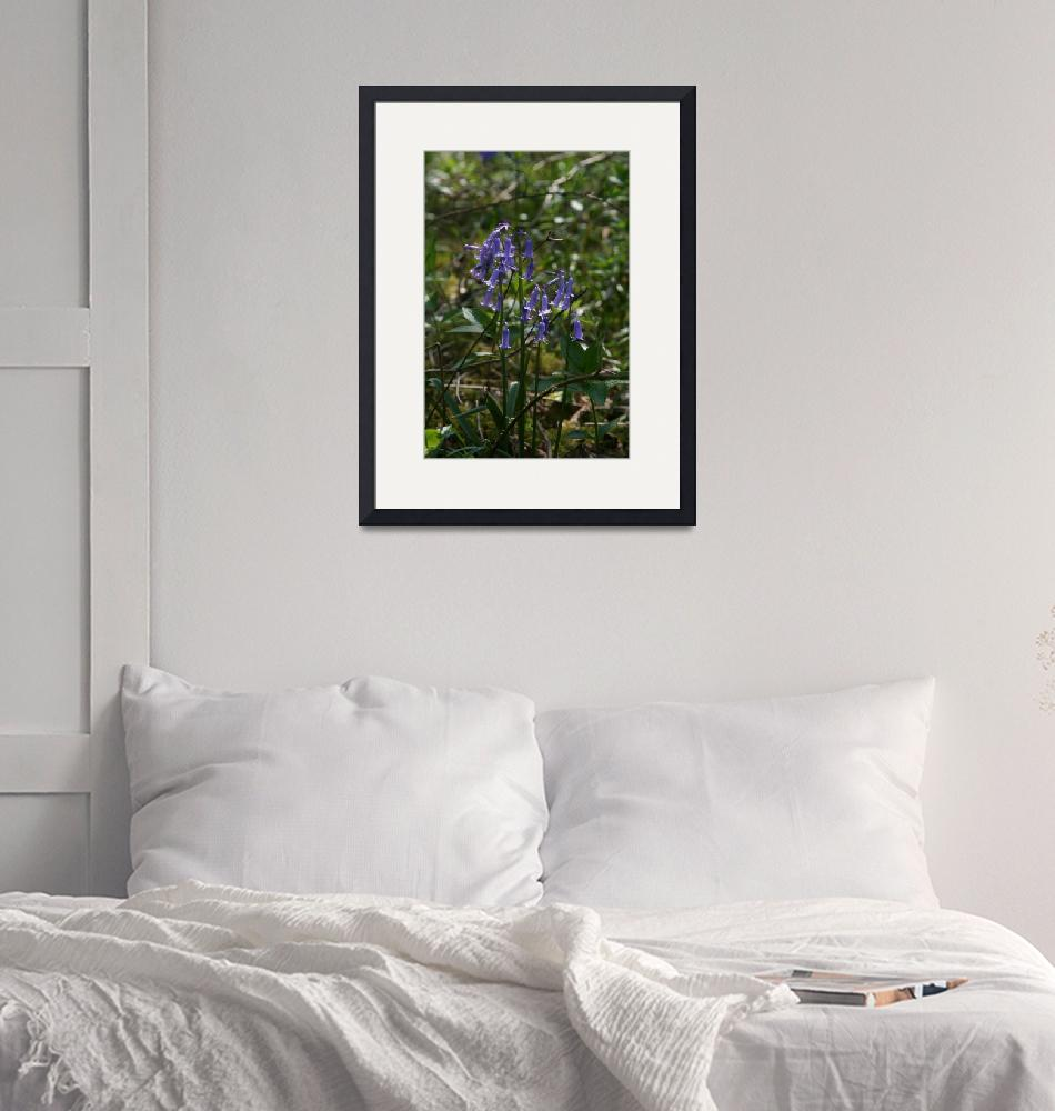 """""""Bluebells""""  by NordenDesign"""