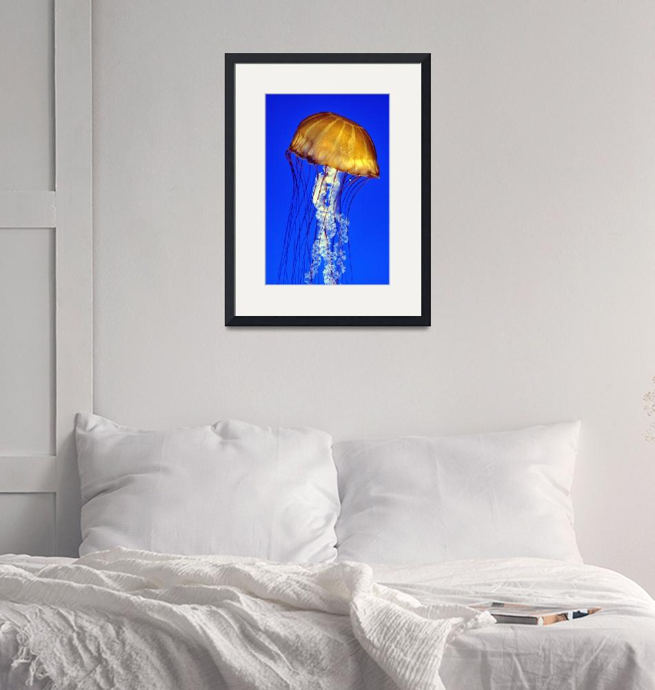 """Jellyfish Portrait""  (2003) by JoaoPonces"