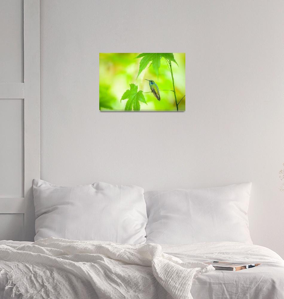 """""""Green Violetear [Colibri thalassinus] _BiNTHu-0947""""  by PronghornPix"""