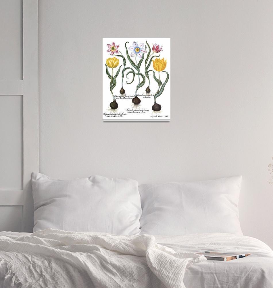 """Besler Botanical Plate 018: Tulip Plants"" by ArtLoversOnline"