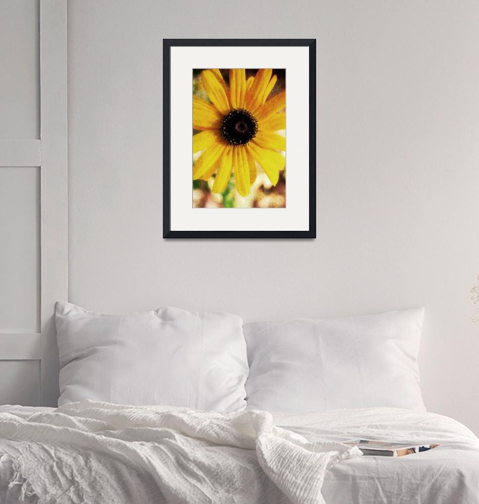 """Black-Eyed Susan""  (2012) by tracyjade"
