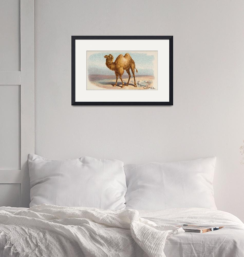 """""""Vintage Illustration of a Camel (1890)""""  by Alleycatshirts"""