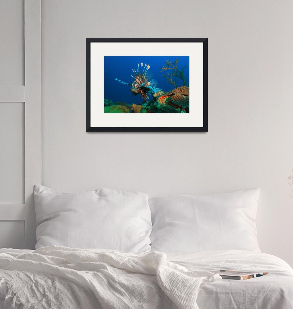 """""""Lionfish and reef""""  (2017) by RoupenBaker"""