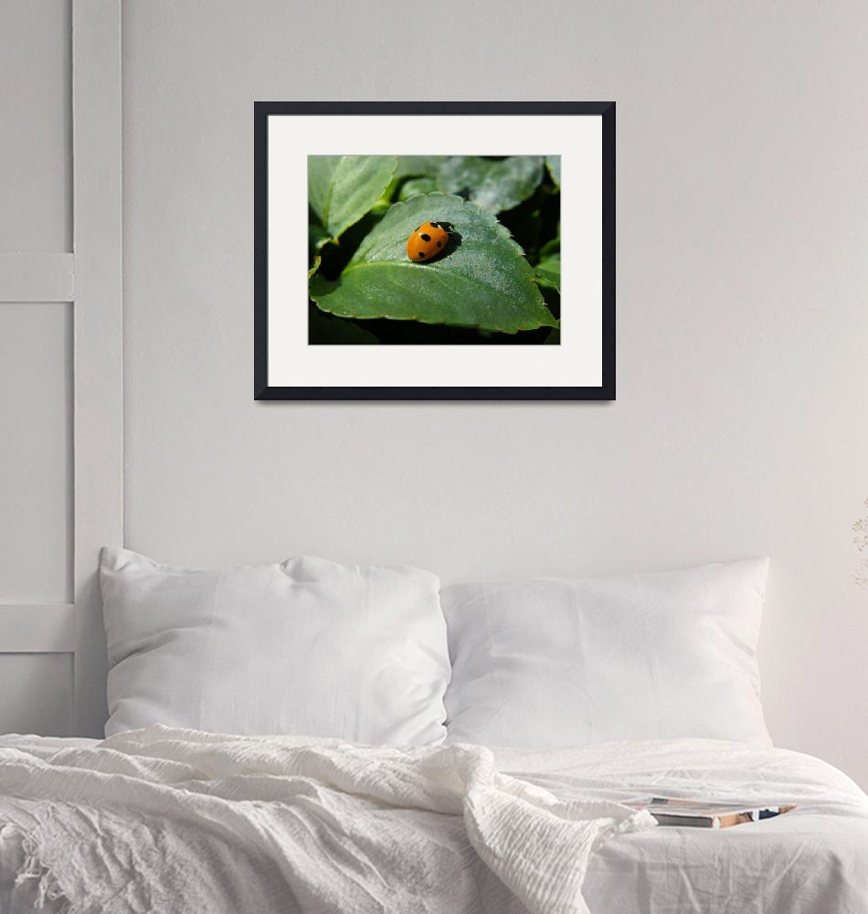 """""""Ladybird""""  (2008) by cotswoldphotogallery"""