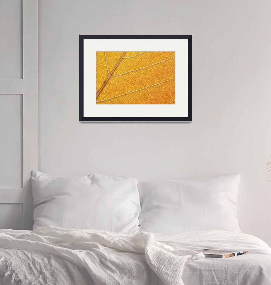"""""""Orange Leaf Macro""""  (2014) by badboo"""