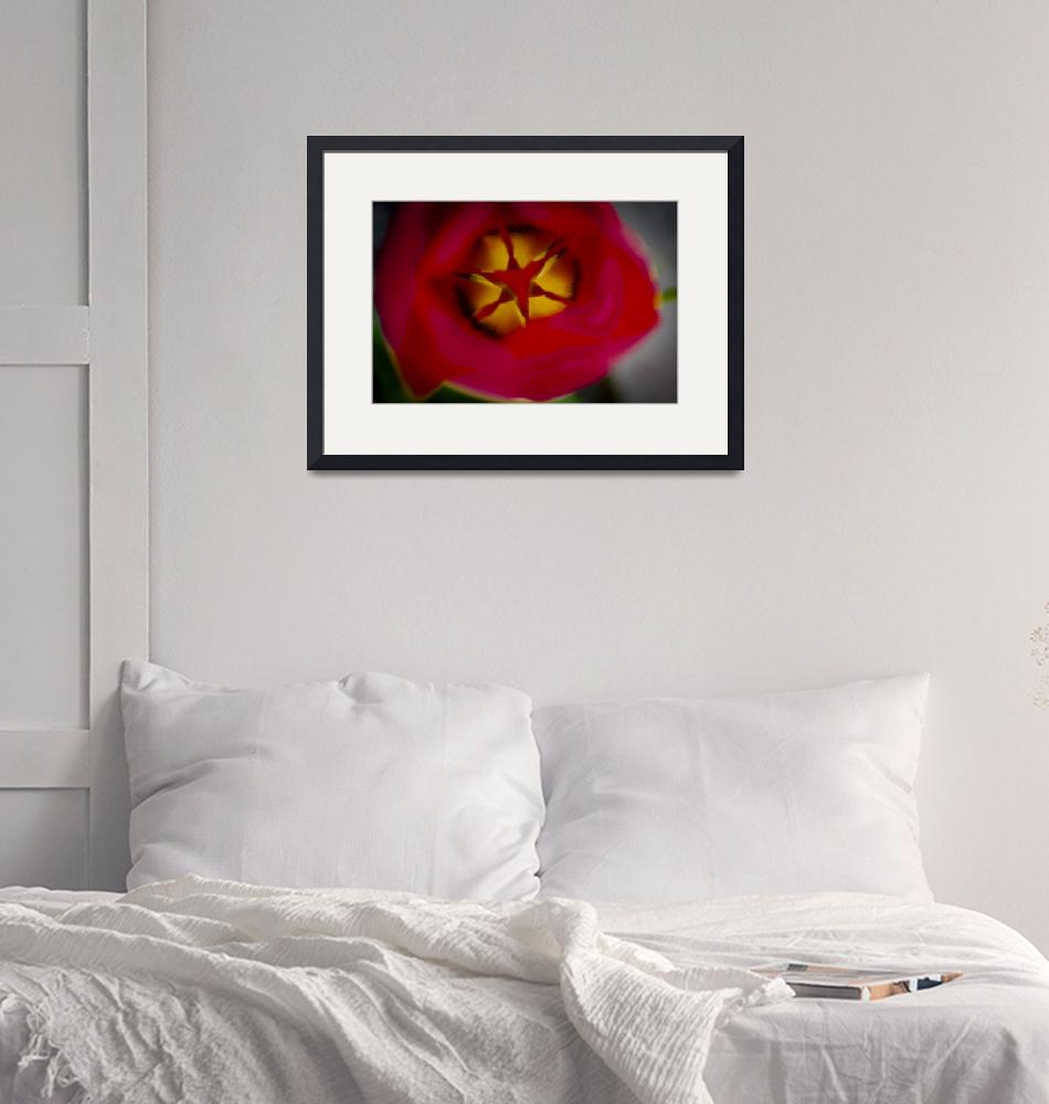 """""""Red Tulip""""  (2011) by vanOgtropPhotography"""