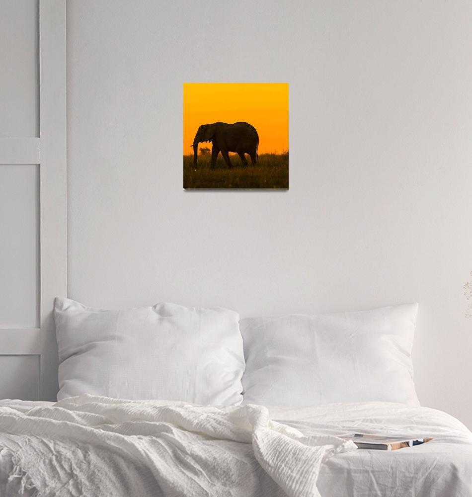 """Botswana Wildlife pictures""  by TravelSync27"