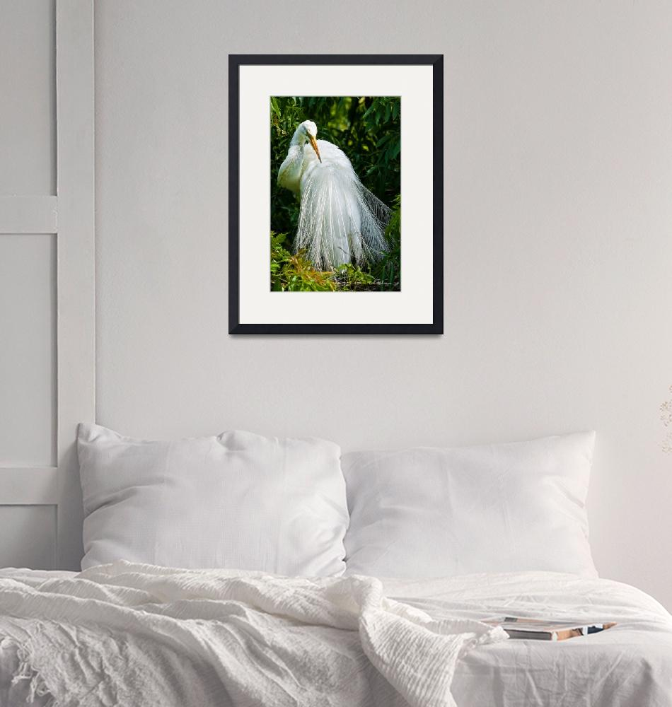 """""""Alluring In White""""  (2009) by OcularPerceptions"""