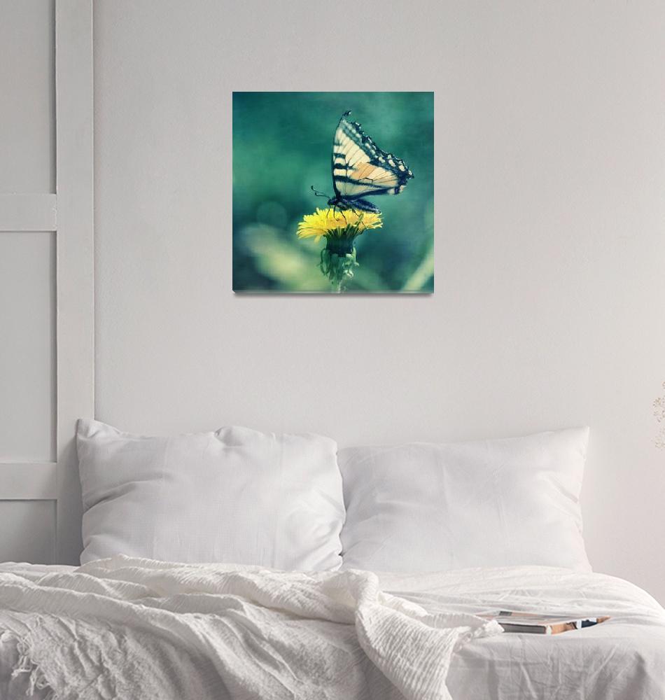"""""""swallowtail""""  (2014) by Piri"""