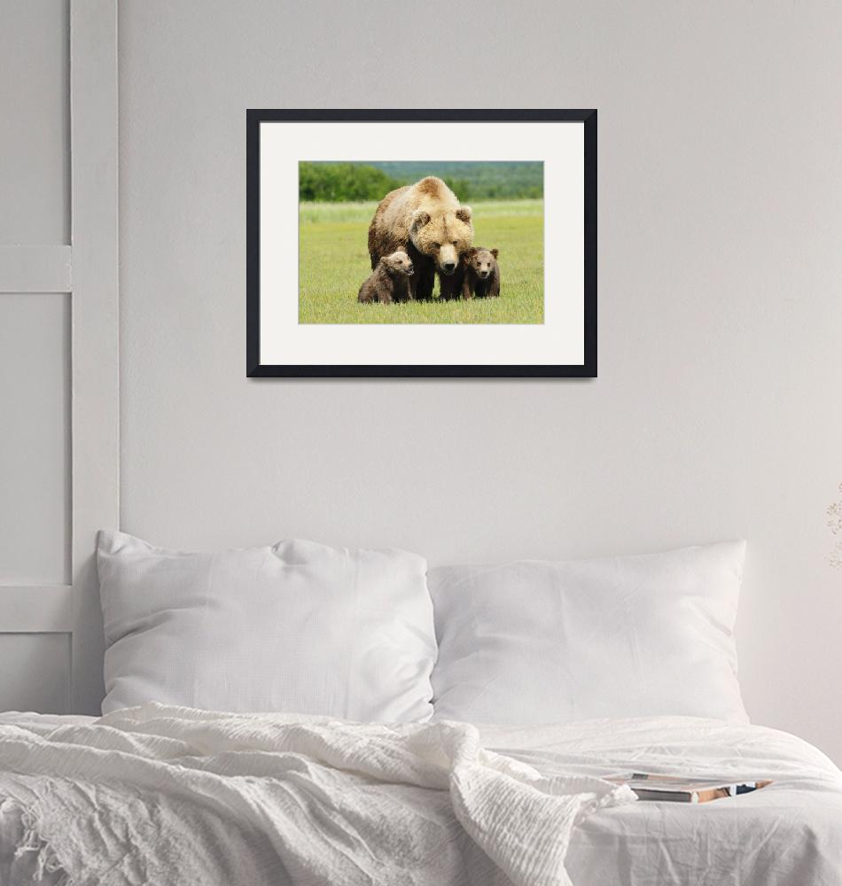 """""""A Brown Grizzly Bear With Cubs Alaska, United Sta""""  by DesignPics"""