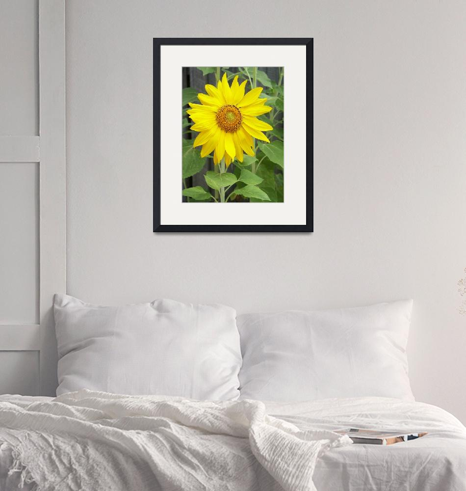 """Sunflower""  by lisa5"