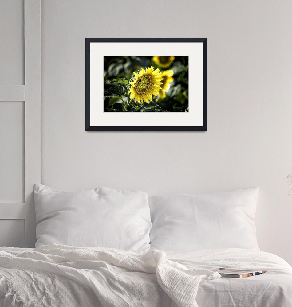 """Sunflowers of Provence""  (2012) by Felstead"