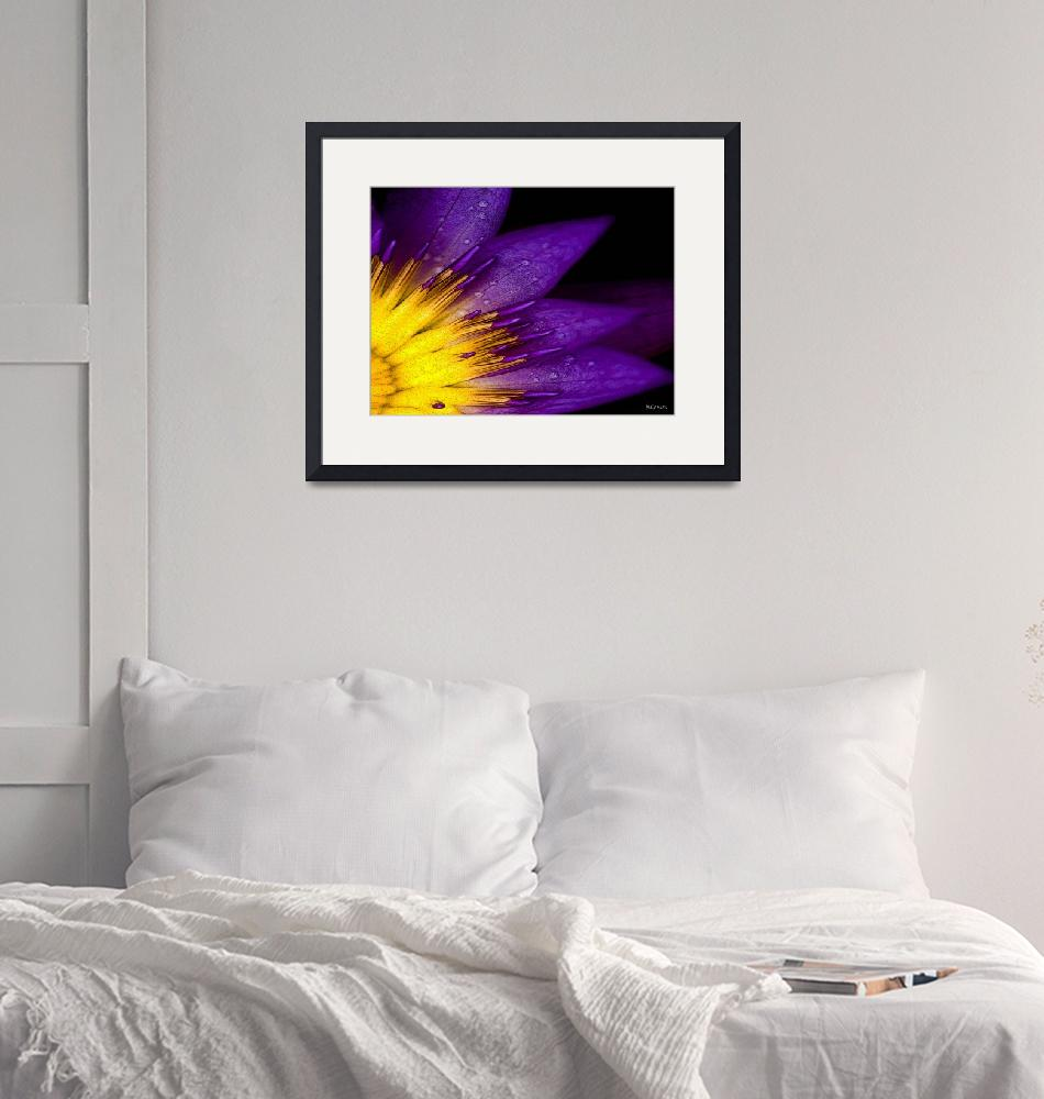 """""""Purple Passion""""  (2011) by carlisconcepts"""