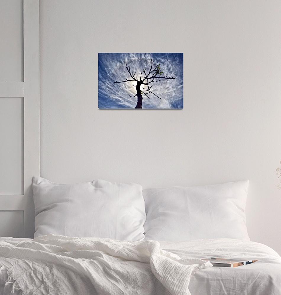 """Solitary Tree in St. John"