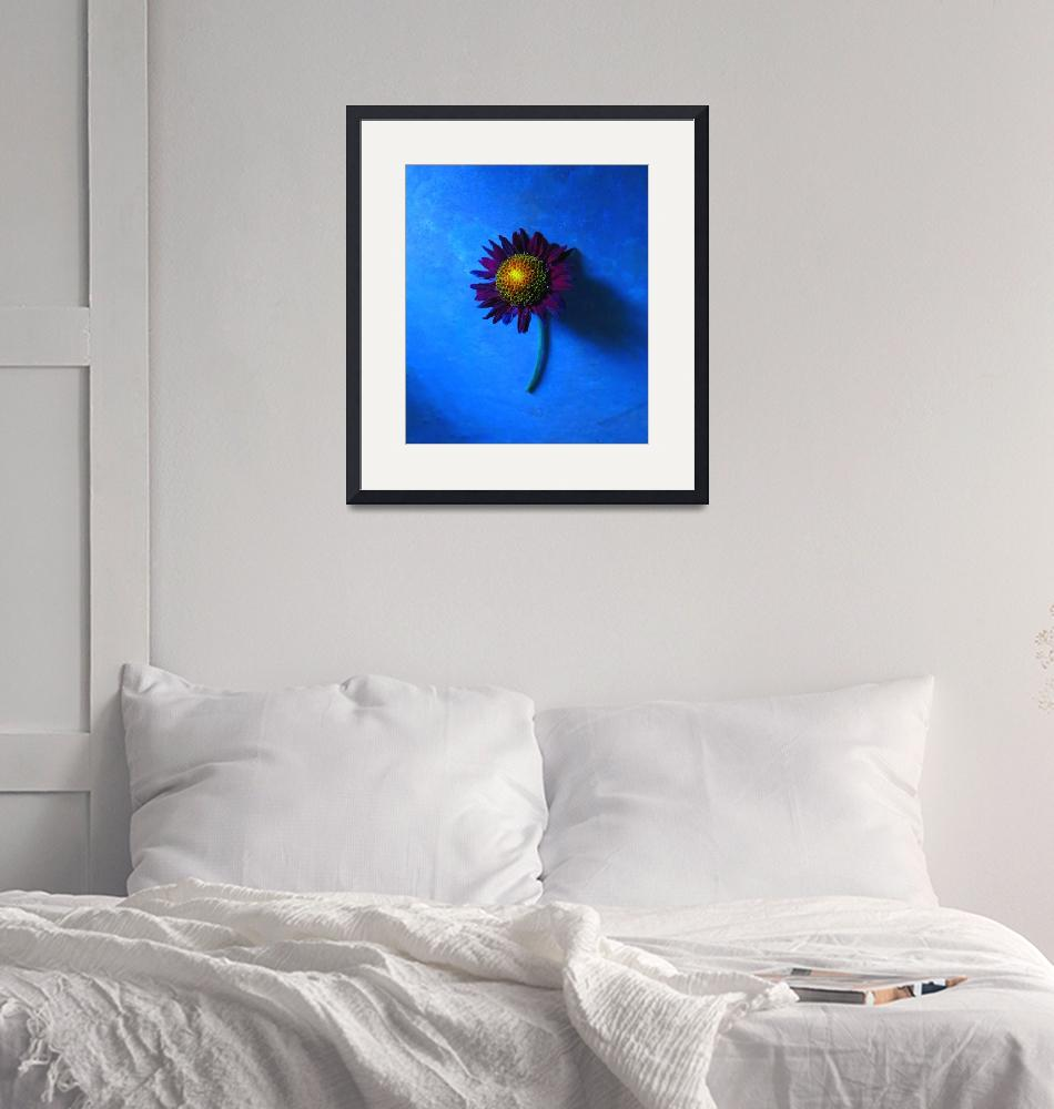 """""""Sunflower with Blue Background""""  (2015) by Saturato"""
