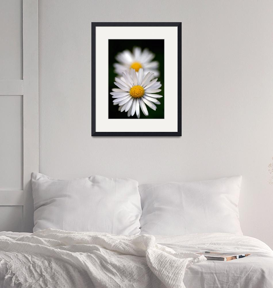 """""""Daisy Perspective""""  (2007) by audioworm"""
