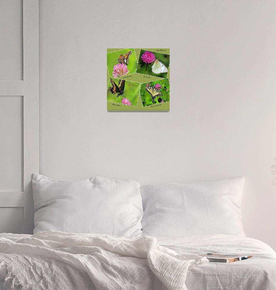 """Butterflies on Red Clover""  (2013) by shelshots"