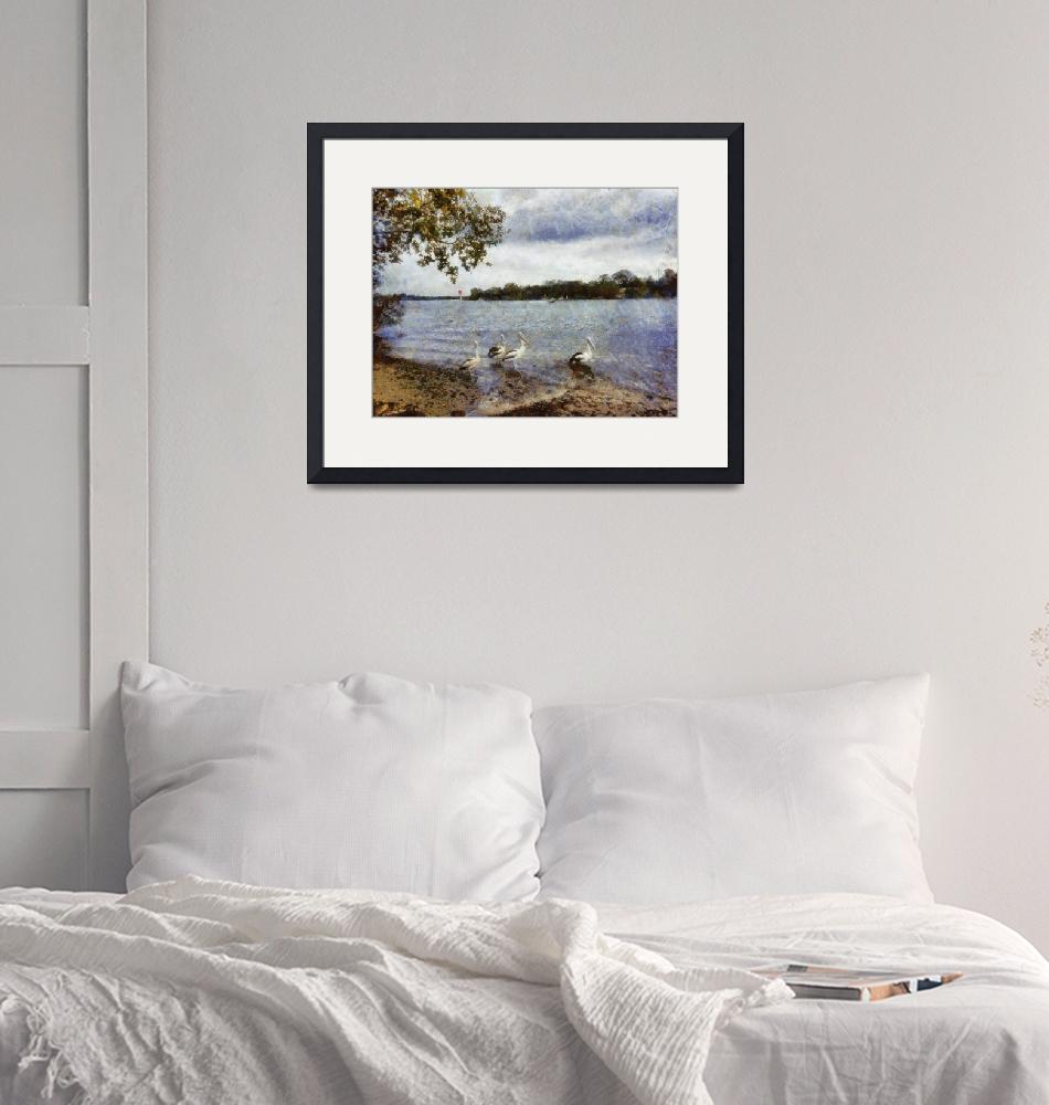"""""""Pelicans at Noosa""""  (2012) by MikeNichol"""