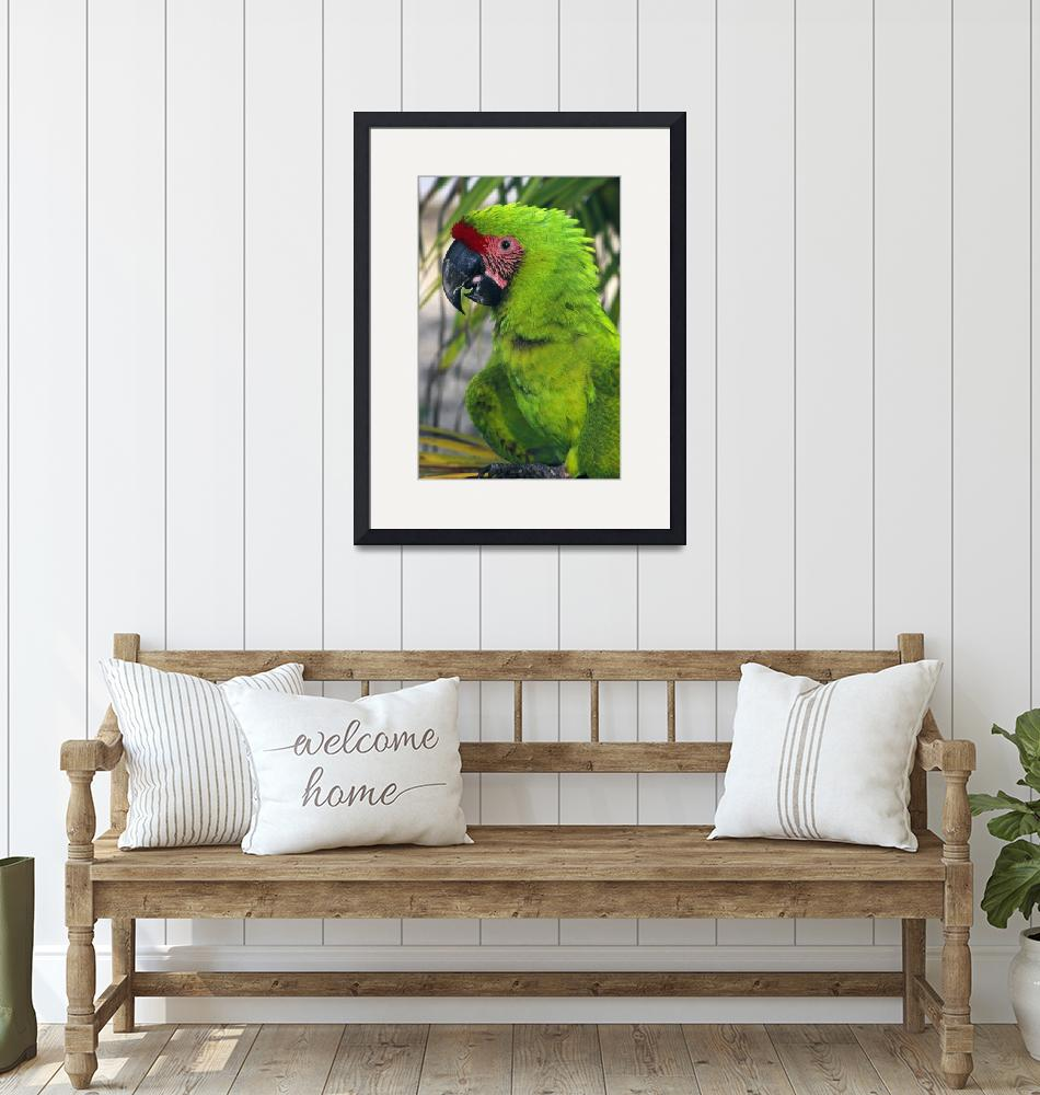 """""""Buffons macaw""""  by Panoramic_Images"""