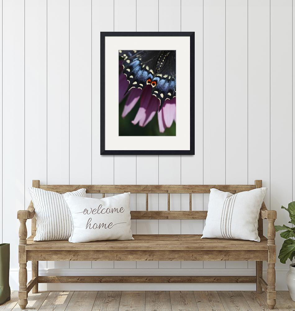 """""""Butterfly Details and Flower Pedals""""  by jimcrotty"""
