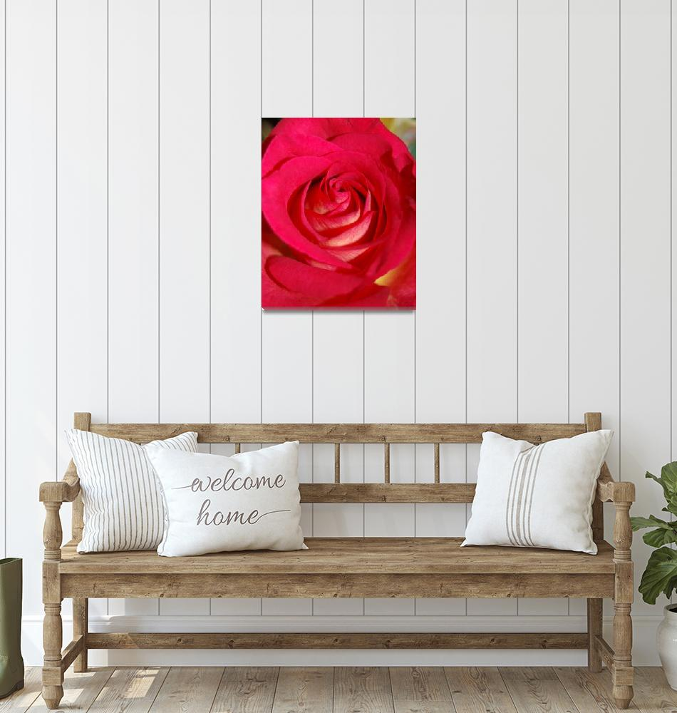 """""""Rose""""  (2008) by lisagriffin"""
