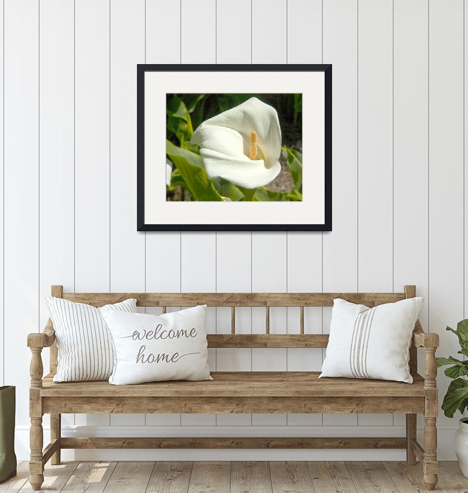 """""""White Lilly-20040327_031""""  by FindleyPhoto"""