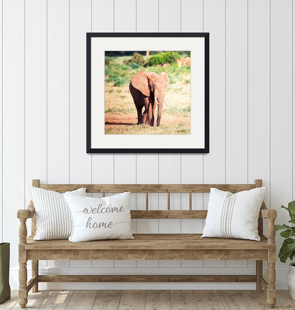 """""""Tsavo pictures""""  by TravelSync27"""