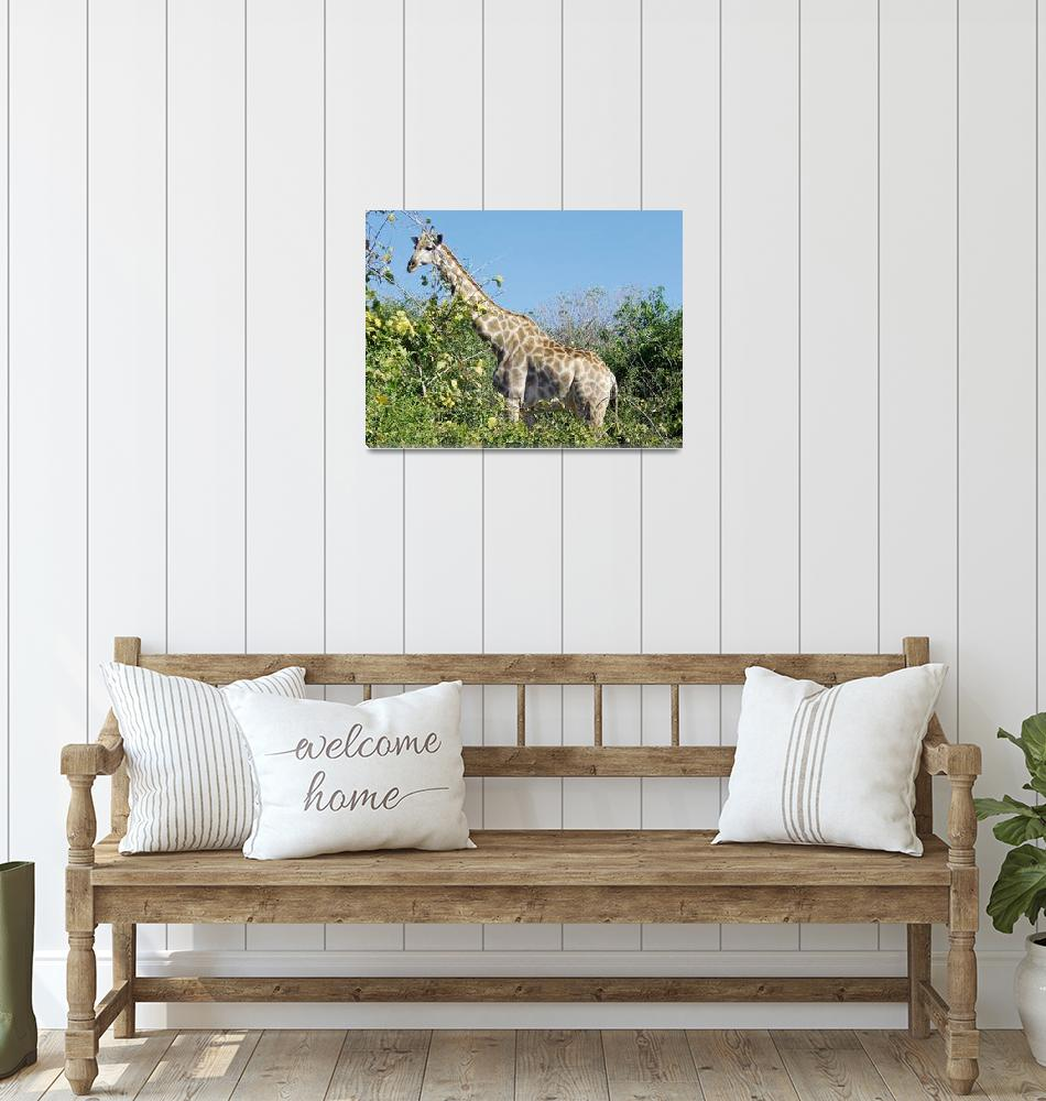 """Giraffe""  by InspiringImages"