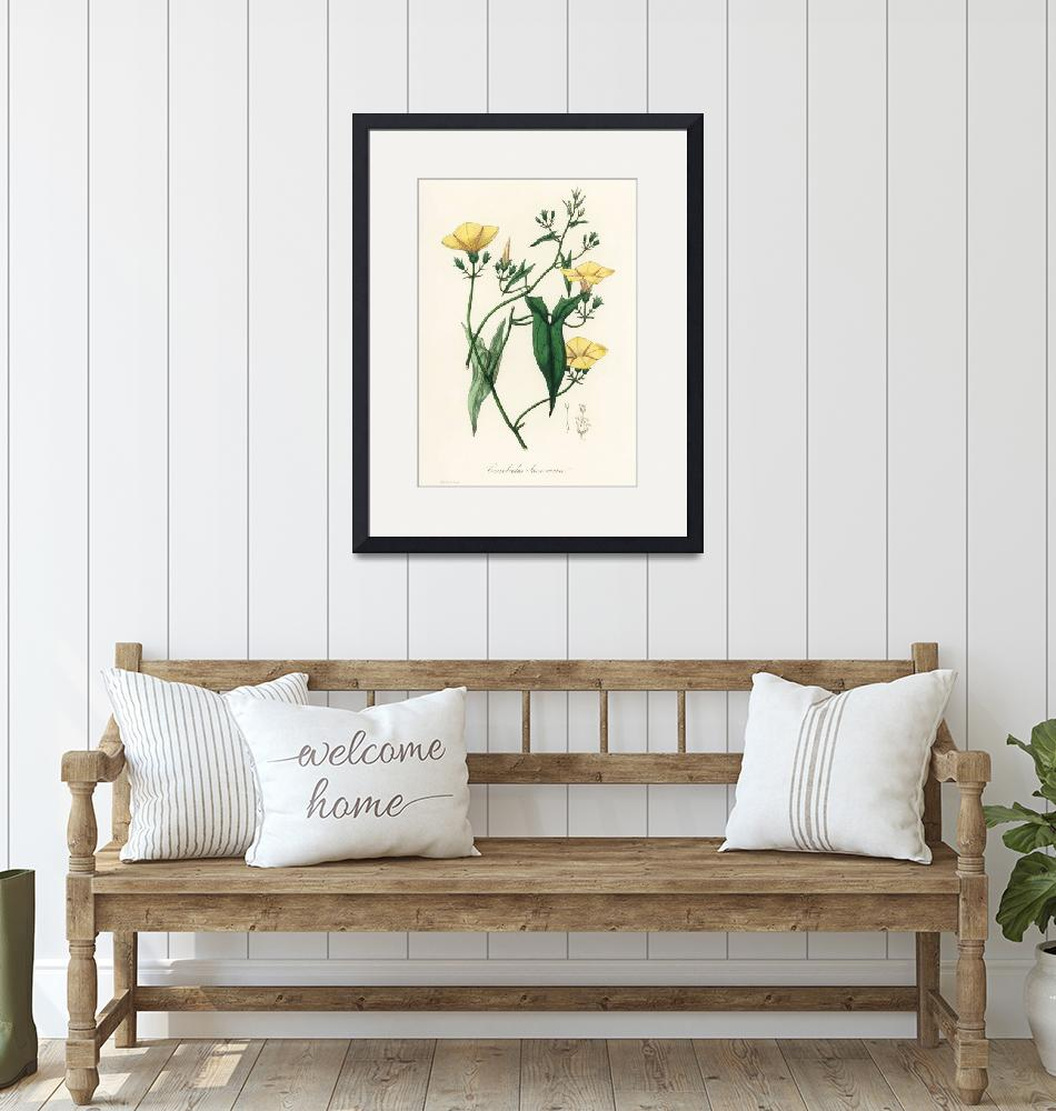 """""""Vintage Botanical Scammony""""  by FineArtClassics"""