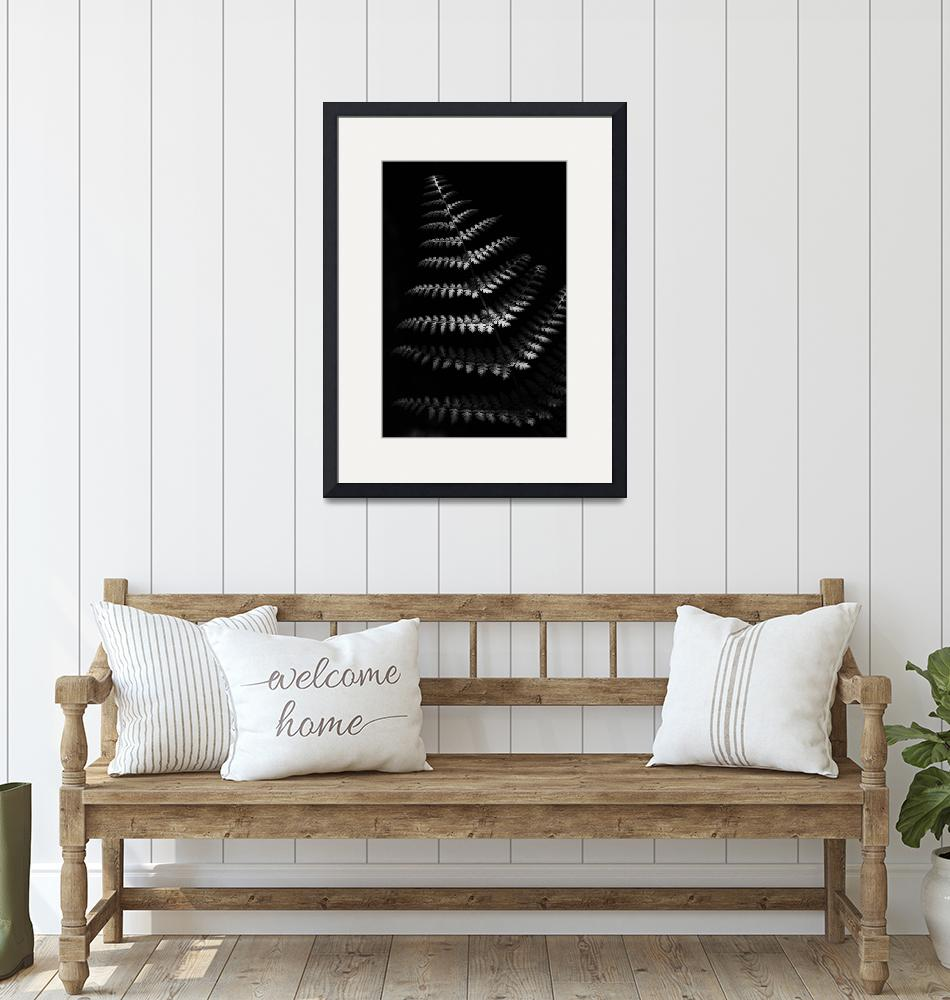 """""""Fern in Black and White by Jim Crotty""""  (2015) by jimcrotty"""