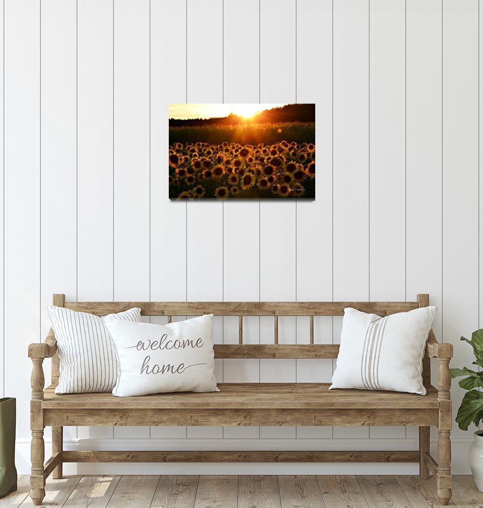 """Sunflowers !""  (2014) by DeniseMackie"