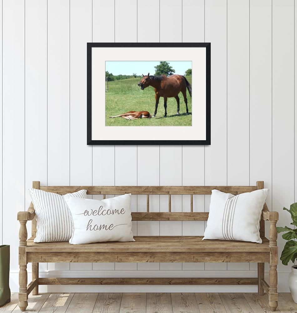 """""""Horse talk""""  (2009) by Hartphotography"""