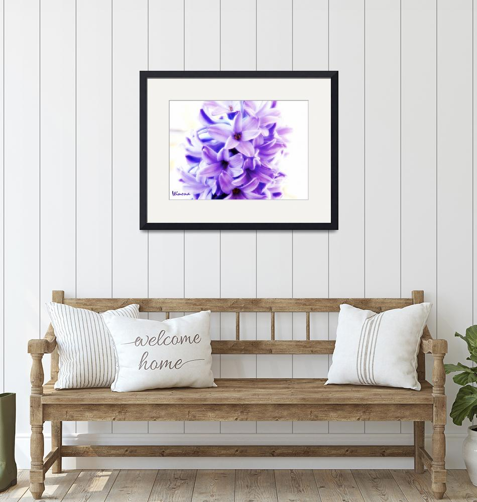 """""""Bright Hyacinth""""  (2013) by Attentiongetters"""